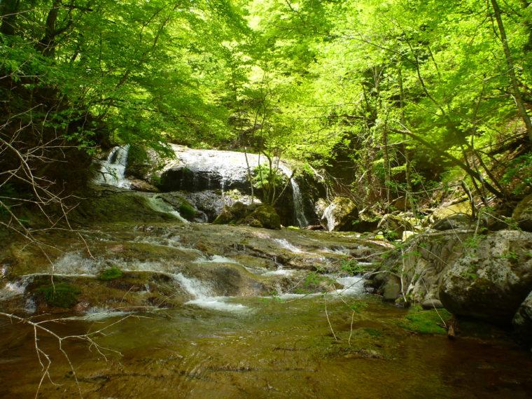 癒し渓の桜沢