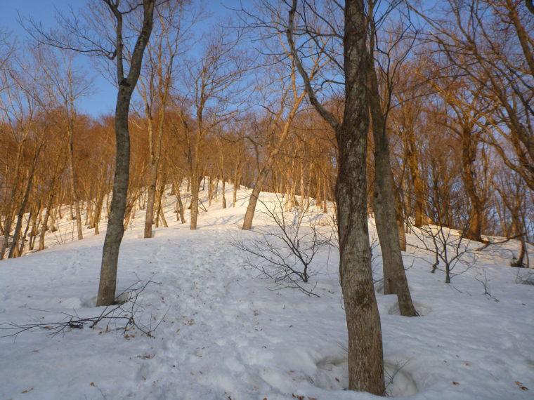 朝日に照らされる雪面
